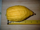 Etrog: 4-6 inches long